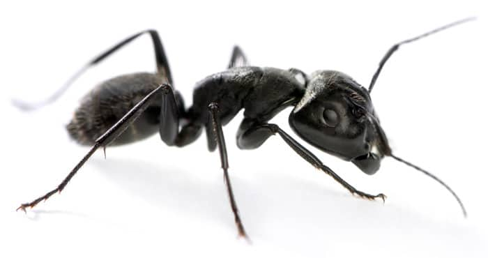 Carpenter Ants Carpenter Ants Meme