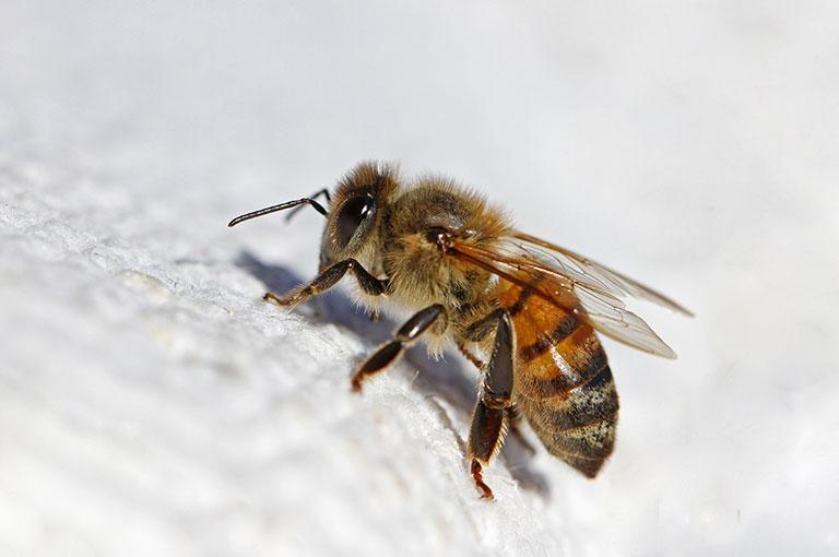 exterminateur-abeille